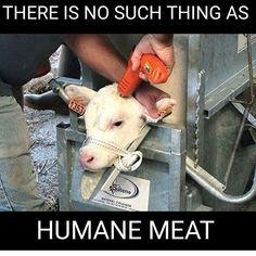 Animal Rights Media Poor baby. Go VEgan! Vegan Memes, Vegan Quotes, Cane Corso, Sphynx, Chinchilla, Leiden, Wild Life, 4 Life, Pitbull