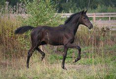Не указано Лошадь Россия Скачки Продажа инвеста