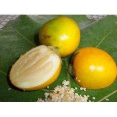 Maná - fruta brasileira, da Amazônia. É rica em cálcio, fósforo e vitamina B3. São usadas em doces, geleias e sorvetes.