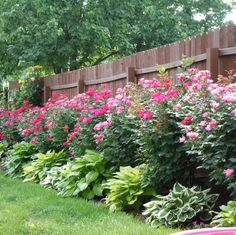 Knock Out Roses and Hosta create an attractive buffer between this lawn and fence.