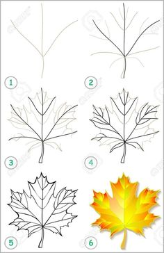 Flower Drawing Discover Page shows how to learn step by step to draw a maple leaf. Page shows how to learn step by step to draw a maple leaf. Developing childrens skills for drawing and coloring. Realistic Drawings, Art Drawings Sketches, Easy Drawings, Pencil Drawings, Plant Drawing, Painting & Drawing, Watercolor Paintings, Drawing Flowers, Flowers To Draw
