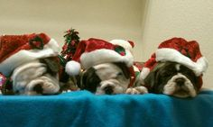 Tiny Pets Holiday Photo Contest. Third place winner: Lorena's three old wise men. #tinypets #tinyco