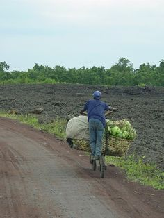 Congolese bicycle transports.