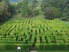 Traquair House Maze - confusing labyrinth