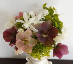 Hellebours, Euphorbia and White Daffodils. Daffodils, Succulents, Garden, Flowers, Plants, Garten, Lawn And Garden, Succulent Plants, Gardens
