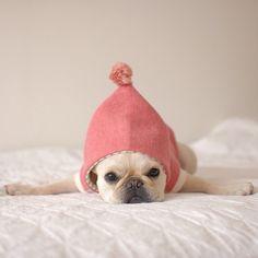Keaton's Sleeping Frenchie - batpigandme: ✈ by tirol_tirol...