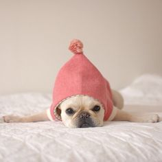 'Tired, just Tired', Keaton's Sleeping Frenchie - batpigandmetumblr.com.