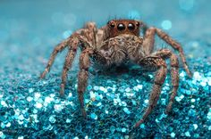 the spider's queen by Nvar Kawan on 500px