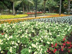 Mitchell Park, so colourful Kwazulu Natal, Pretoria, Beautiful Beaches, South Africa, Coast, Park, City, Places, Hampers
