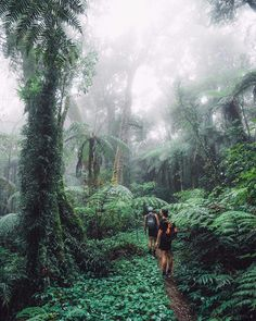 Would you adventure here? PC: @jasoncharleshill in Queensland Australia by tentree