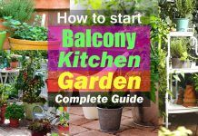 How to Start a Balcony Kitchen Garden | Complete Guide