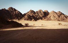 Sinai Desert. Egypt.