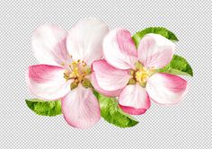 Check out Apple tree blossom by LiliGraphie on Creative Market