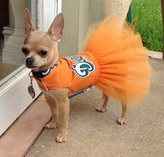 I hate dressing dogs up, but this Miami Dolphins tutu and the beautiful Chihuahua is just too cute! Pets 3, Pet Dogs, Dogs And Puppies, Puppies Stuff, Doggies, Animals Beautiful, Cute Animals, Baby Animals, Miami Dolphins Funny