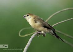 bird by ArshadPHamza. Please Like http://fb.me/go4photos and Follow @go4fotos Thank You. :-)