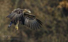 Landing Sea Eagle by KrzysztofM via http://ift.tt/2ns2R9c