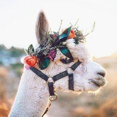 floral crown on a llama
