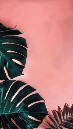 Leaves Wallpaper Iphone, Plant Wallpaper, Tropical Wallpaper, Flower Background Wallpaper, Summer Wallpaper, Beach Wallpaper, Pastel Wallpaper, Cute Wallpaper Backgrounds, Pretty Wallpapers
