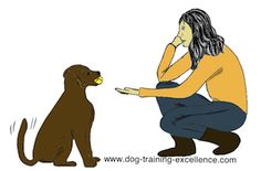 Dog Training Hand Signals DROP IT