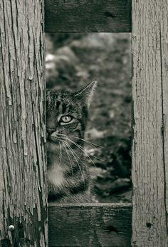 """framed cat"" 