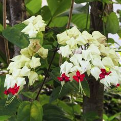 Tips : Les plantes grimpantes à feuillage persistant