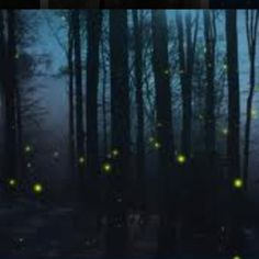 Fireflies are back. Hiked through Palmetto State Park at night and saw beautiful ones.