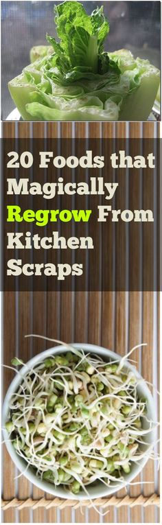 20 Foods that Magically Regrow From Kitchen Scraps