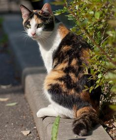 Pretty Cats, Beautiful Cats, Cats And Kittens, Tabby Cats, Funny Kittens, Bengal Cats, Adorable Kittens, Animals And Pets, Cute Animals