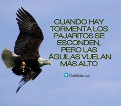 las águilas vuelan más alto en la tormenta