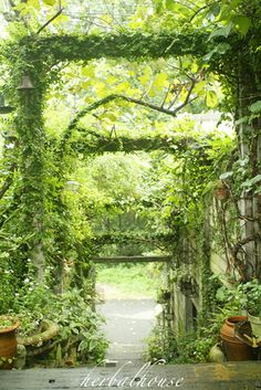 Green arbor tunnel over stairs