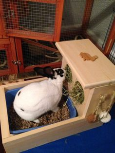 Solid Pine Bunny Rabbit feeder with built in, slide out litter box. I developed this feeder for my own bunny as a solution to the problem of them