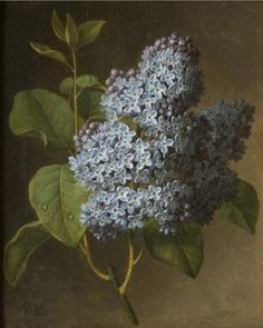 Lilac Blossoms (circa 1800).  Oil on canvas by Christiaen van Pol ( 1752 - 1813 ).  Image and text courtesy Philadelphia Museum of Art.