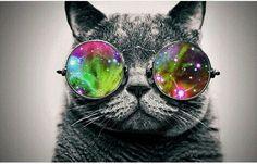 Cat with colours glases its perfect for wallpers for your phone  Gatito con las gafas de colores , perfecto para el fondo de tu telefono