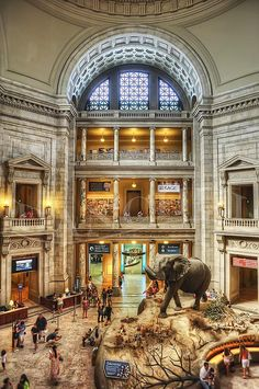 Smithsonian Institution National Museum of Natural History, Washington, D.C.     posted by www.futons-direct.co.uk