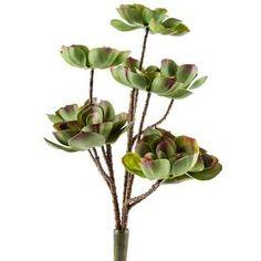 """Green & Burgundy Echeveria Succulent Bush 11.5""""W $15"""