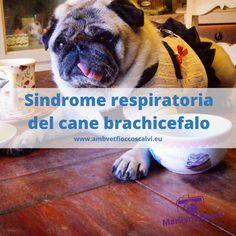 Il cane con il muso schiacciato (brachicefalo) è più soggetto a problemi respiratori. Vediamoli qui