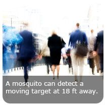 Mosquito fact: A mosquito can detect a moving target from approximately 18 ft away. This varies on different factors, such as how windy out it is that day. #trivia #insects #education  #mosquito and #fact