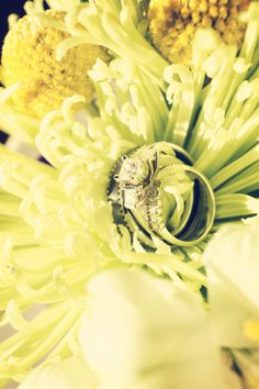 Photo by Travis. #WeddingRings #MinneapolisWeddingPhotographers #WeddingIdeas