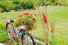 Christy Morrow's gorgeous bike basket