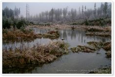 Swamps in the Bieszczady Mountains in #Poland.  www.simplycrpathians.com