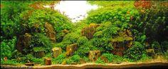 Planted aquarium inspiration for a fresh year Planted Aquarium, Aquarium Aquascape, Aquascaping Plants, Discus Aquarium, Aquarium Terrarium, Nature Aquarium, Freshwater Aquarium Fish, Aquarium Driftwood, Aquarium Design