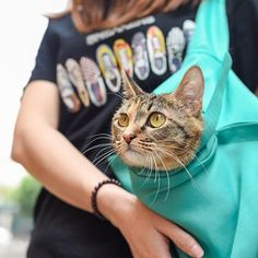 Pet Sling Carrier Small Dog Travel Bag Pet Carry Case for Puppyand Cats Hands Free Shoulder Pet Pouch and Tote Outdoor Travel Supplies Animals Supplies Removal Mitts-Rollers Supplies Animals Harnesses-Leashes Pet Dogs, Dogs And Puppies, Dog Cat, Pet Puppy, Cute Baby Animals, Funny Animals, Small Animals, Cute Cats, Funny Cats