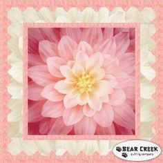 Dream Big - Simple Path Wild Rose Free Quilt Pattern