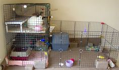 Info on buying & building indoor rabbit cages and hutches.