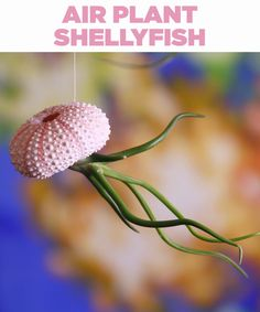 "These Air Plant ""Shellyfish"" Are Ideal For People Without A Green Thumb Crafts To Do, Diy Crafts, Beach Crafts, Terrariums, Projects To Try, Craft Projects, Craft Ideas, Diy Ideas, Decor Ideas"
