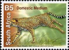 Definitive values - Cheetah) Union Of South Africa, Stamp Auctions, Popular Hobbies, First Day Covers, Picture Postcards, Vintage Stamps, Show Us, Afrikaans, Stamp Collecting