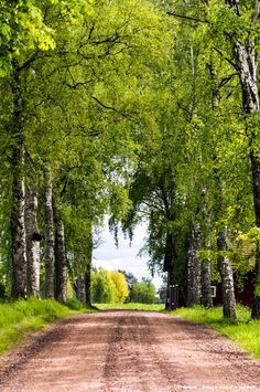 View top-quality stock photos of Country Road In Vastergstland Sweden. Find premium, high-resolution stock photography at Getty Images. Beautiful Roads, Beautiful Landscapes, Beautiful World, Beautiful Places, Landscape Photography, Nature Photography, Tree Tunnel, Country Landscaping, Back Road