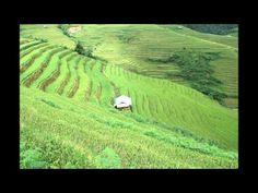 AGENDA TOUR VIETNAM| Photos des Rizieres en terraces au Nord Vietnam