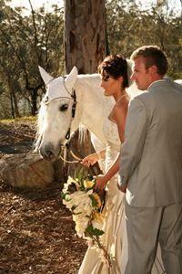 wedding horse hire img2