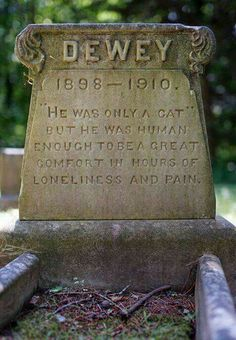 Sweet sentiments on a cat's tombstone Crazy Cat Lady, Crazy Cats, Animals And Pets, Cute Animals, Pet Cemetery, Cemetery Angels, Amor Animal, Gatos Cats, All About Cats